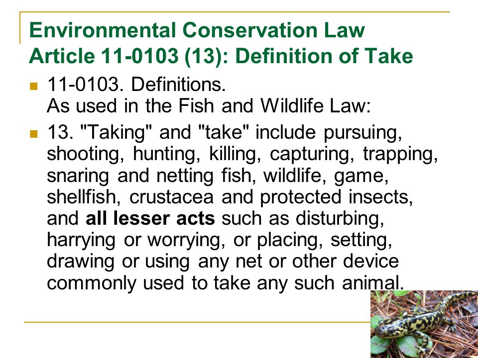 Environmental Conservation Law Article 11-0103 (13): Definition of Take