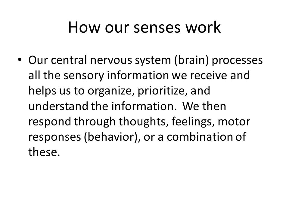 How our senses work