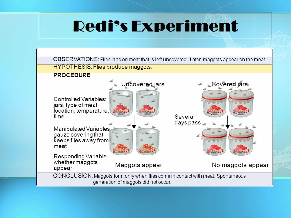 Redi's Experiment Uncovered jars Covered jars Maggots appear