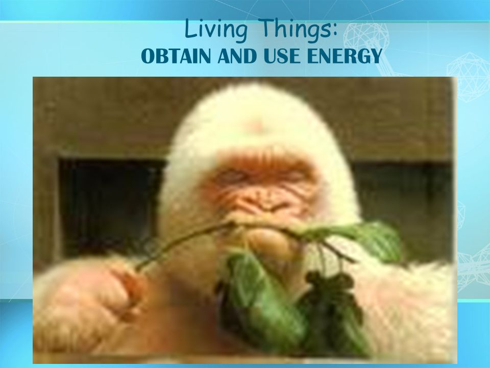 Living Things: OBTAIN AND USE ENERGY