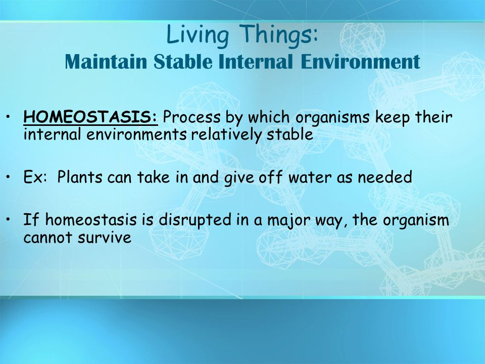 Living Things: Maintain Stable Internal Environment