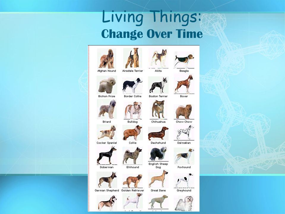 Living Things: Change Over Time