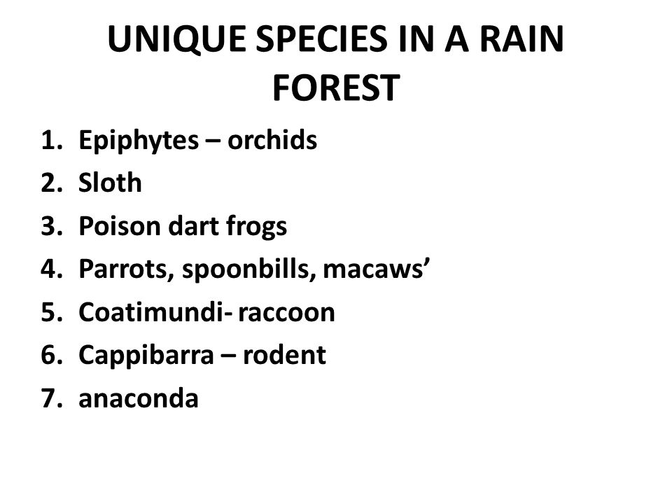 UNIQUE SPECIES IN A RAIN FOREST