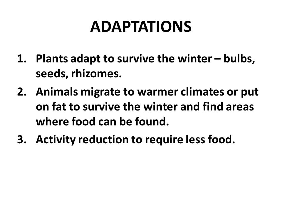 ADAPTATIONS Plants adapt to survive the winter – bulbs, seeds, rhizomes.