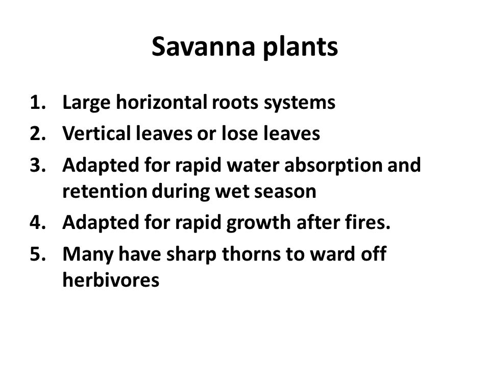 Savanna plants Large horizontal roots systems