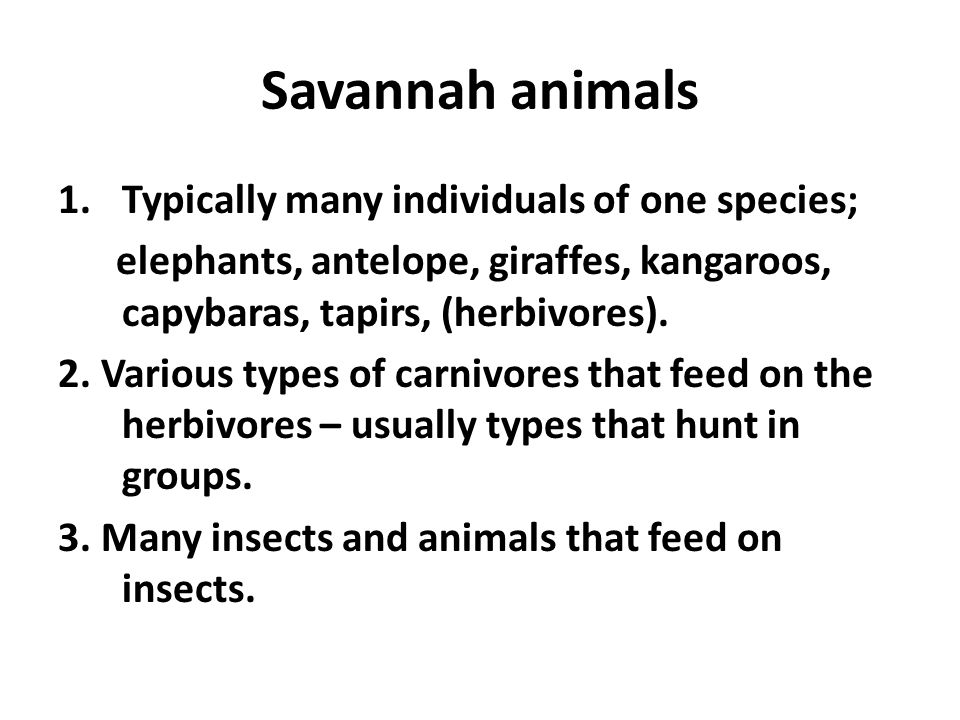 Savannah animals Typically many individuals of one species;
