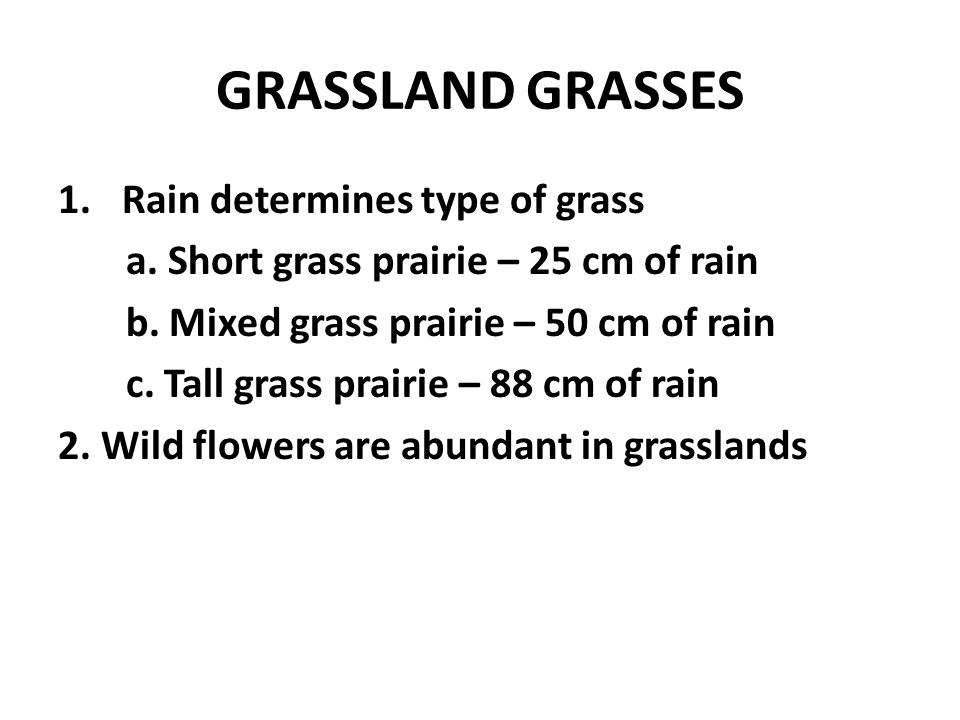 GRASSLAND GRASSES Rain determines type of grass