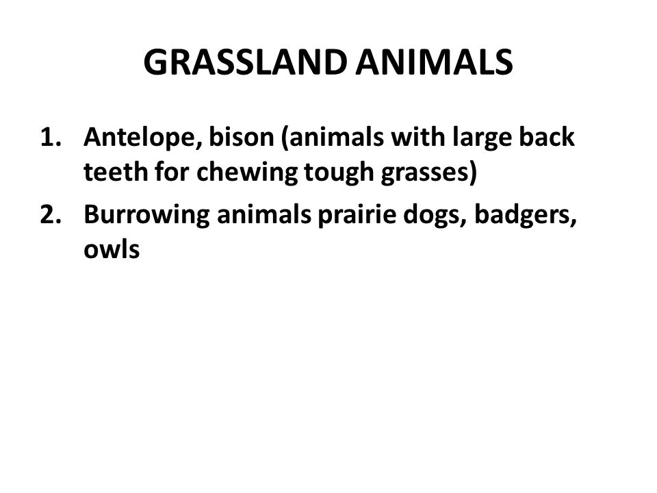 GRASSLAND ANIMALS Antelope, bison (animals with large back teeth for chewing tough grasses) Burrowing animals prairie dogs, badgers, owls.