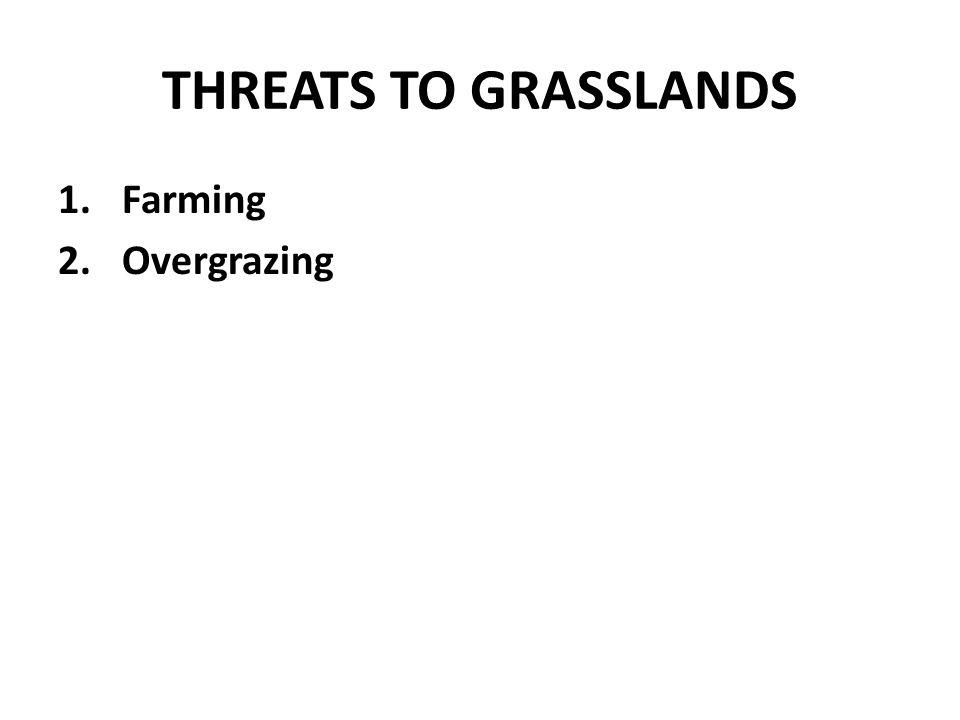 THREATS TO GRASSLANDS Farming Overgrazing