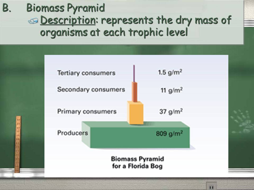 B. Biomass Pyramid Description: represents the dry mass of organisms at each trophic level