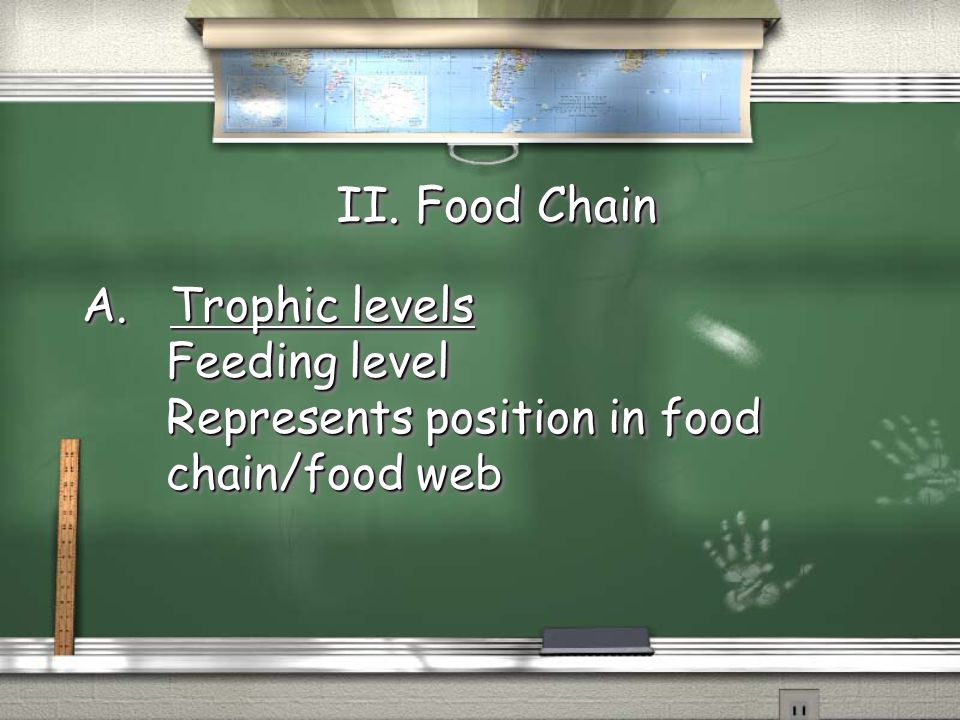 II. Food Chain A. Trophic levels Feeding level