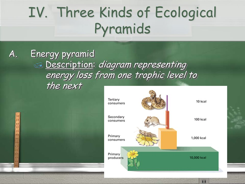 IV. Three Kinds of Ecological Pyramids