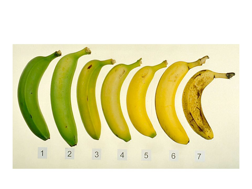 Prolong life by keeping warm temperatures - This is best explained by the banana's slowed metabolic functions at a lower rate due to lower