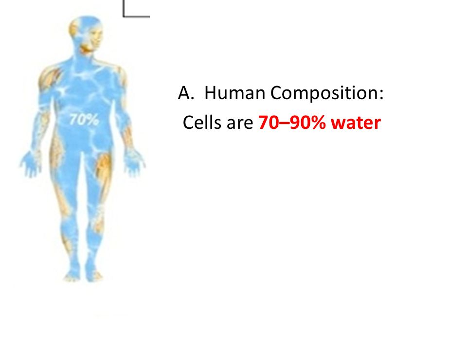 Human Composition: Cells are 70–90% water