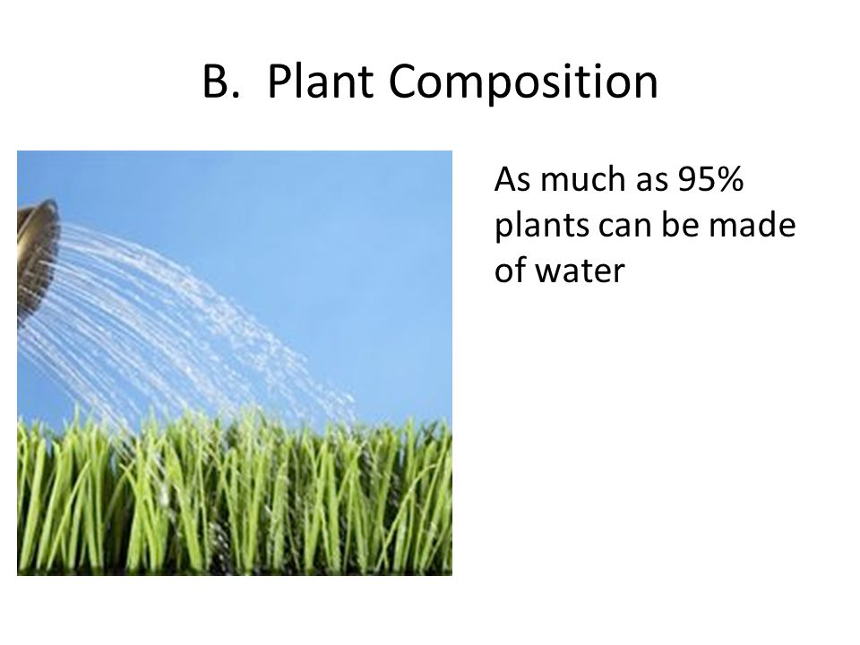 B. Plant Composition As much as 95% plants can be made of water
