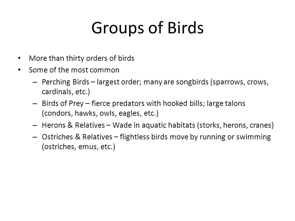 Groups of Birds More than thirty orders of birds