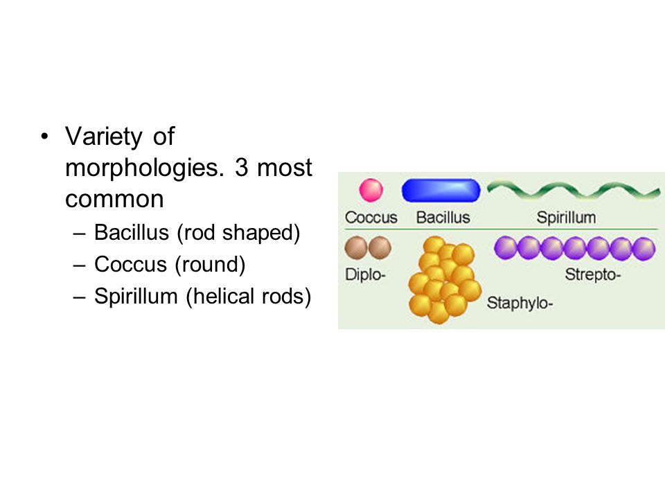 Variety of morphologies. 3 most common
