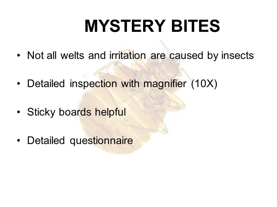 MYSTERY BITES Not all welts and irritation are caused by insects
