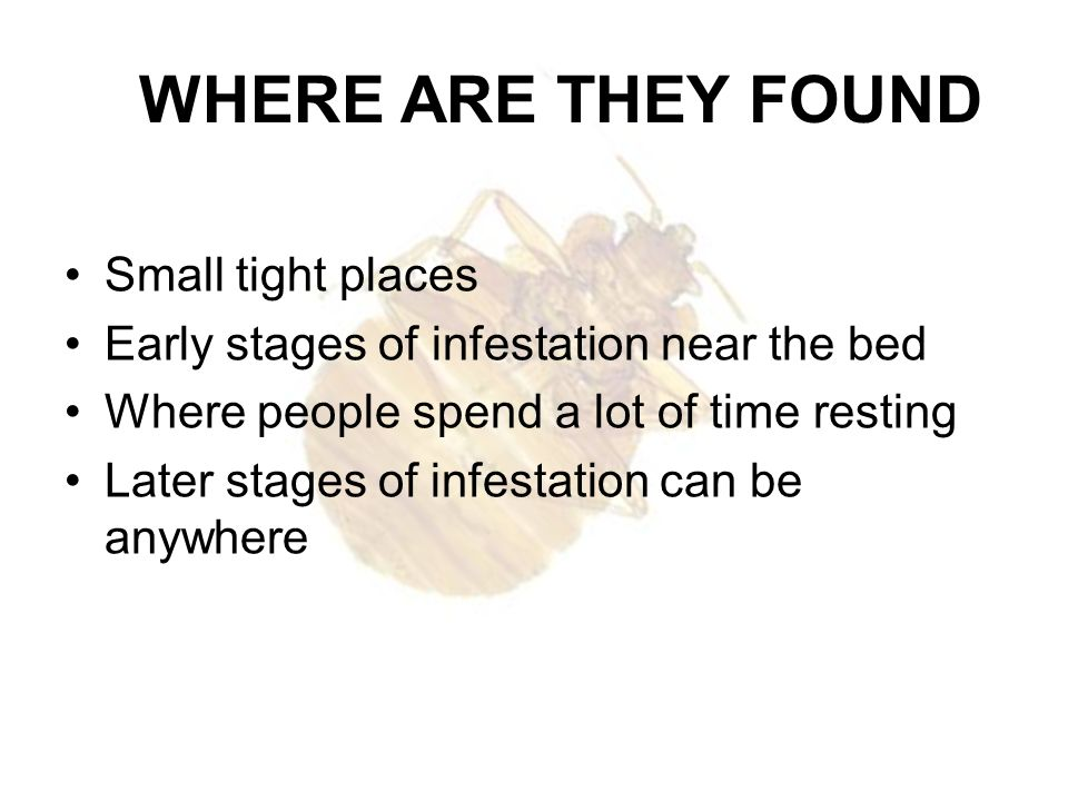 WHERE ARE THEY FOUND Small tight places