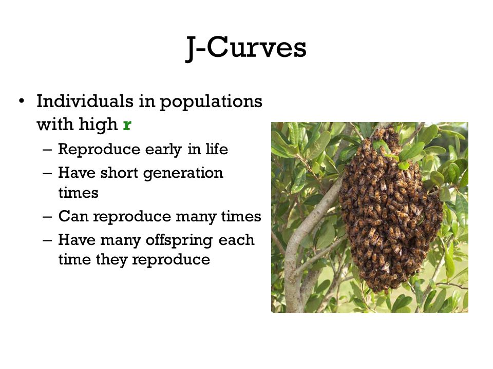 J-Curves Individuals in populations with high r