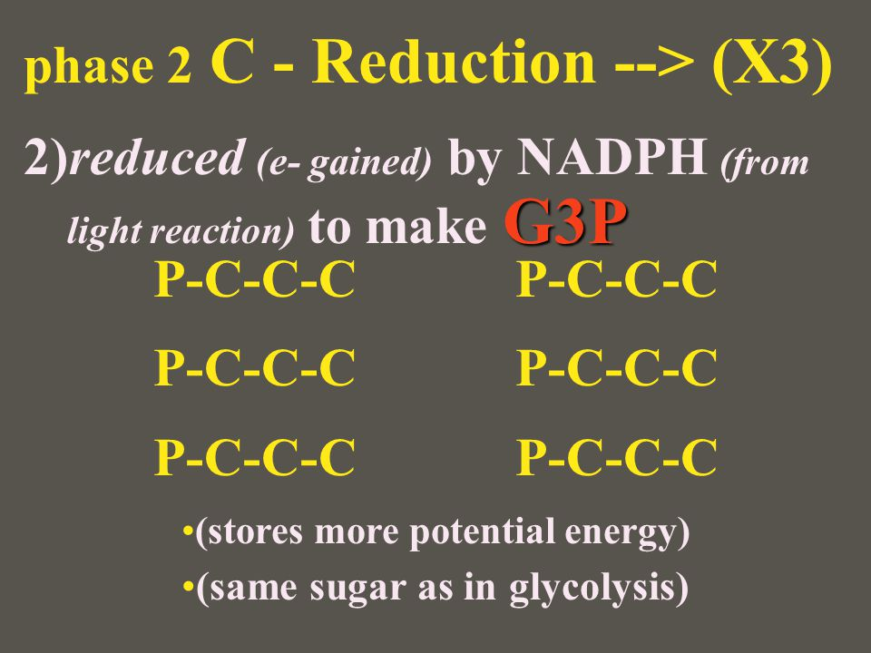 (stores more potential energy) (same sugar as in glycolysis)