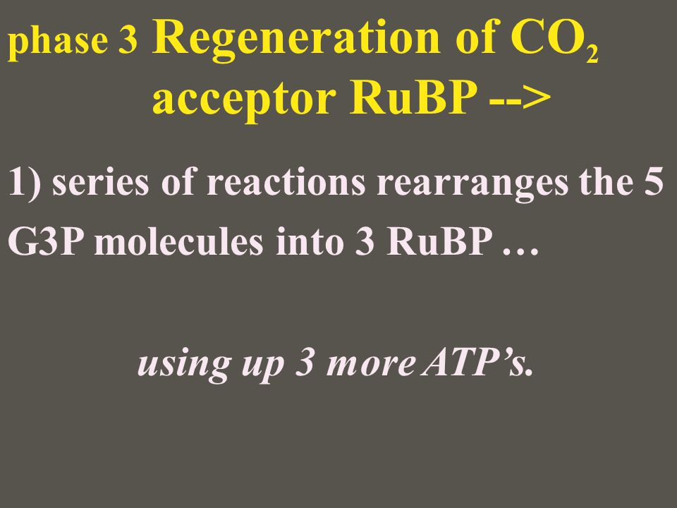 phase 3 Regeneration of CO2 acceptor RuBP -->