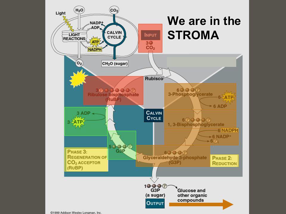 We are in the STROMA