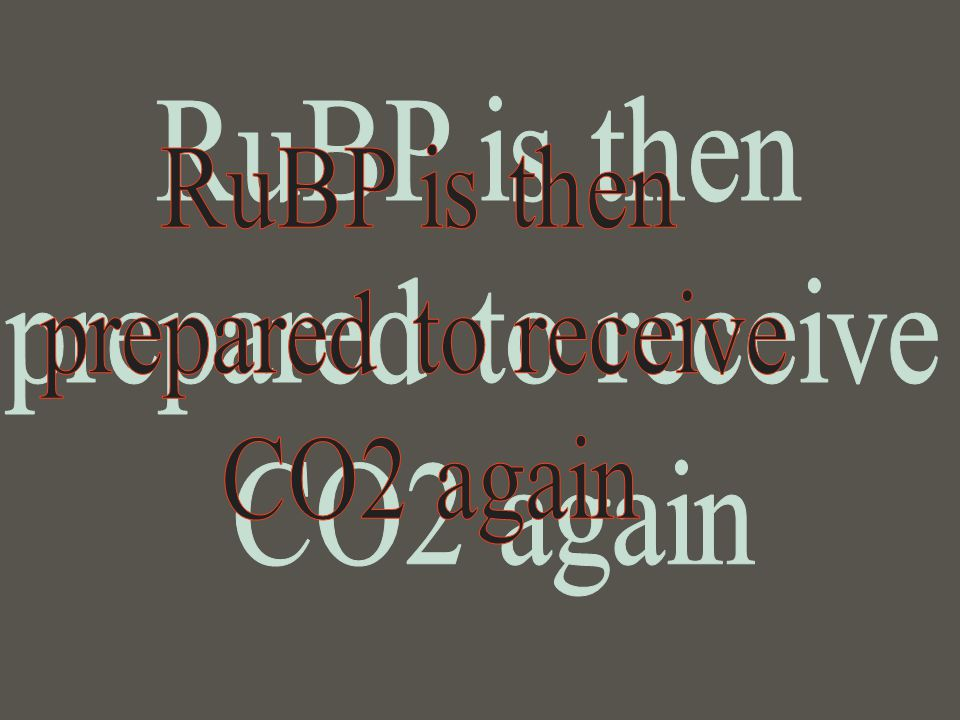 RuBP is then prepared to receive CO2 again