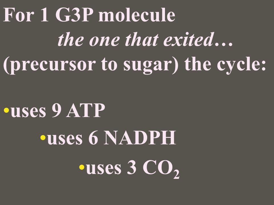 For 1 G3P molecule the one that exited… (precursor to sugar) the cycle: