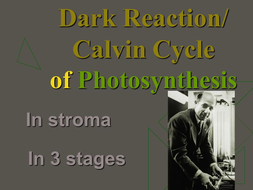 Dark Reaction/ Calvin Cycle