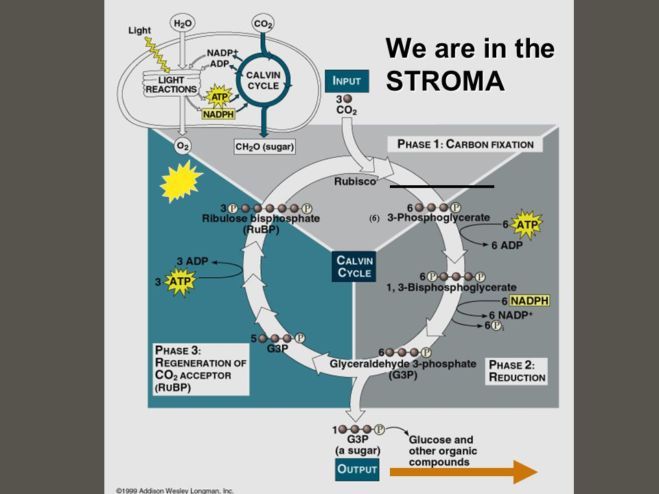 We are in the STROMA (6)