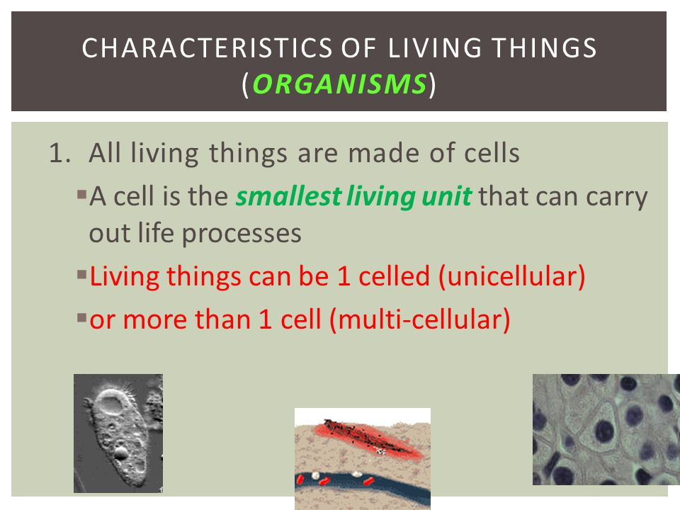 Characteristics of Living Things (organisms)