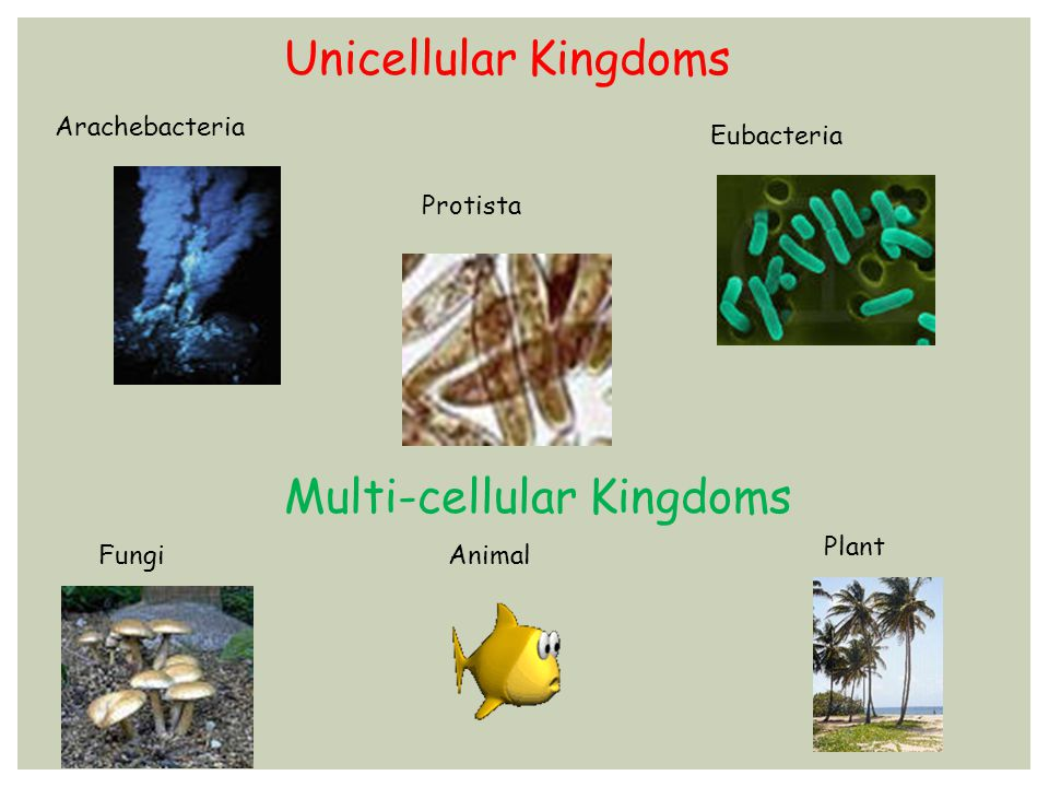 Multi-cellular Kingdoms