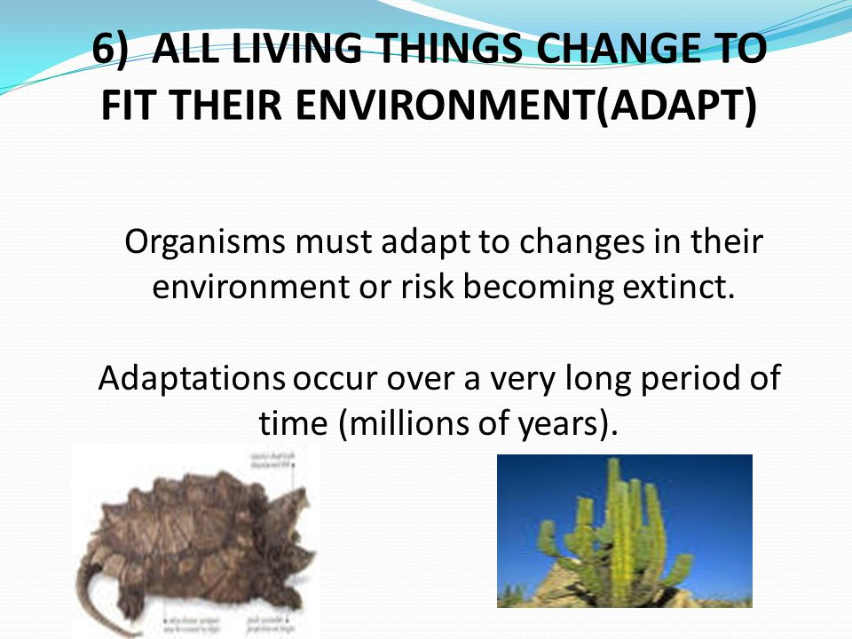6) ALL LIVING THINGS CHANGE TO FIT THEIR ENVIRONMENT(ADAPT)