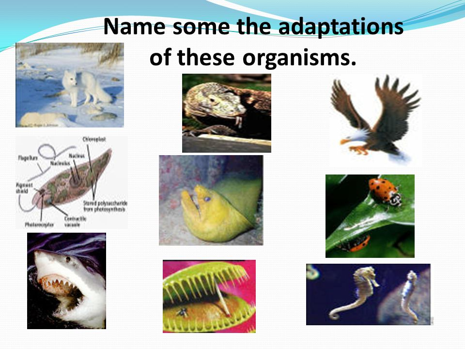 Name some the adaptations of these organisms.