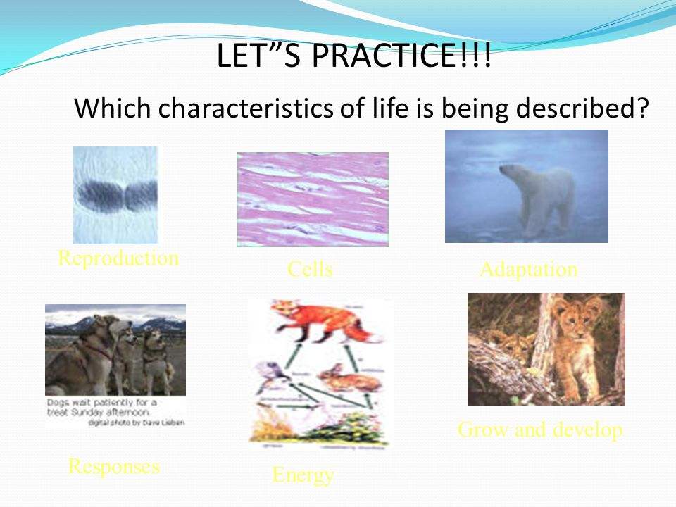 LET S PRACTICE!!! Which characteristics of life is being described
