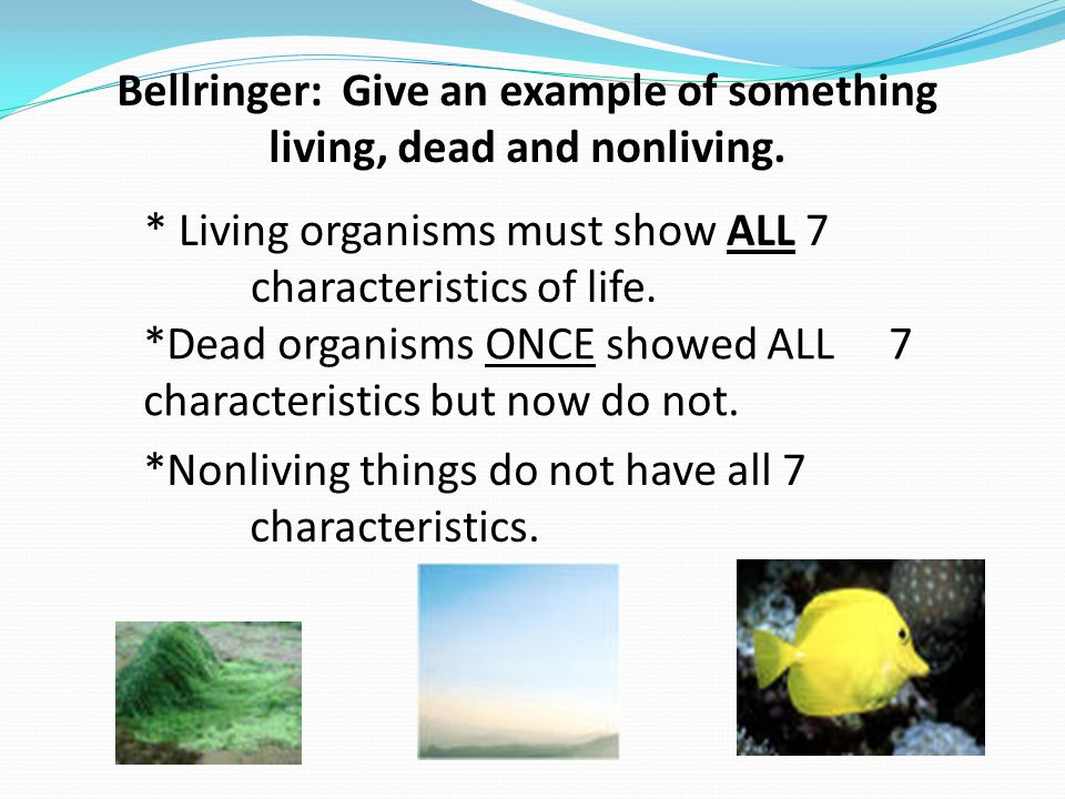 Bellringer: Give an example of something living, dead and nonliving.
