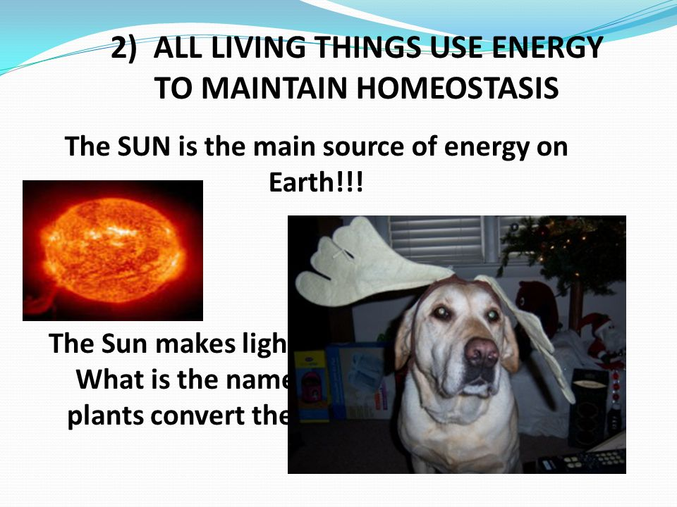 2) ALL LIVING THINGS USE ENERGY TO MAINTAIN HOMEOSTASIS