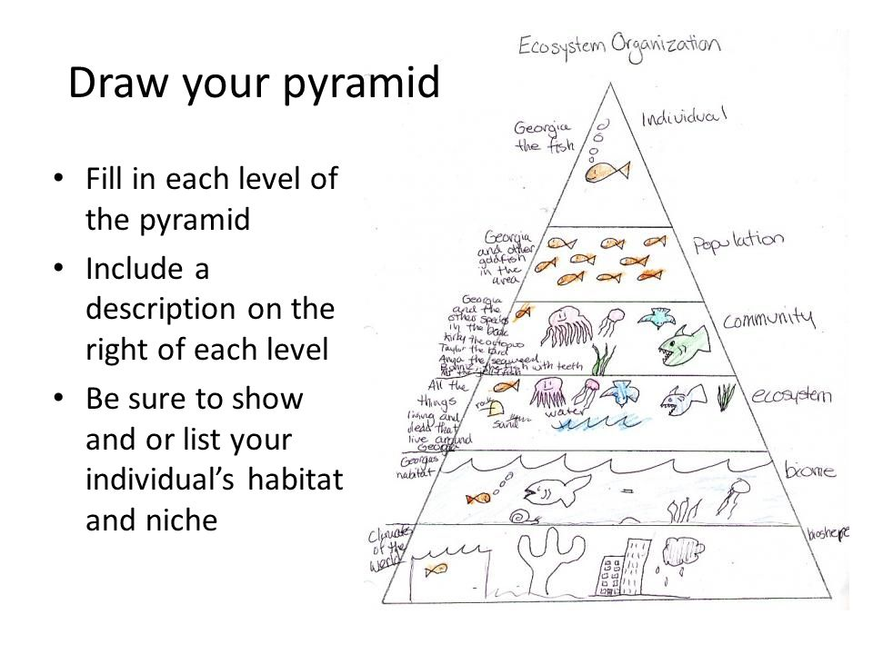 Draw your pyramid Fill in each level of the pyramid