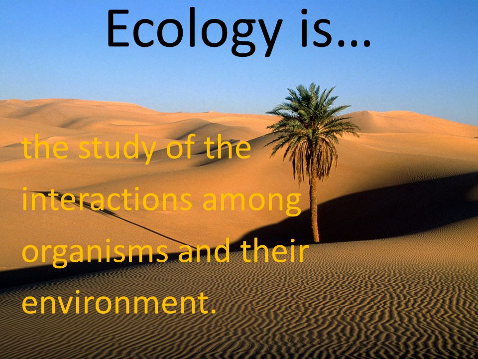 Ecology is… the study of the interactions among organisms and their environment.