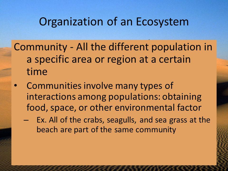 Organization of an Ecosystem