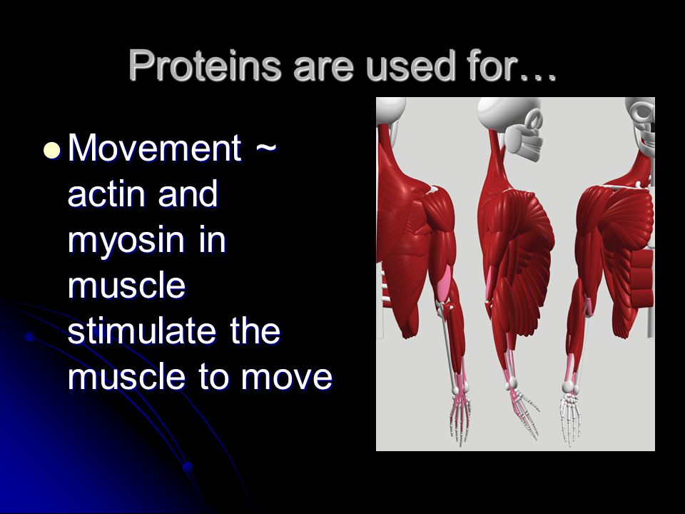 Proteins are used for… Movement ~ actin and myosin in muscle stimulate the muscle to move