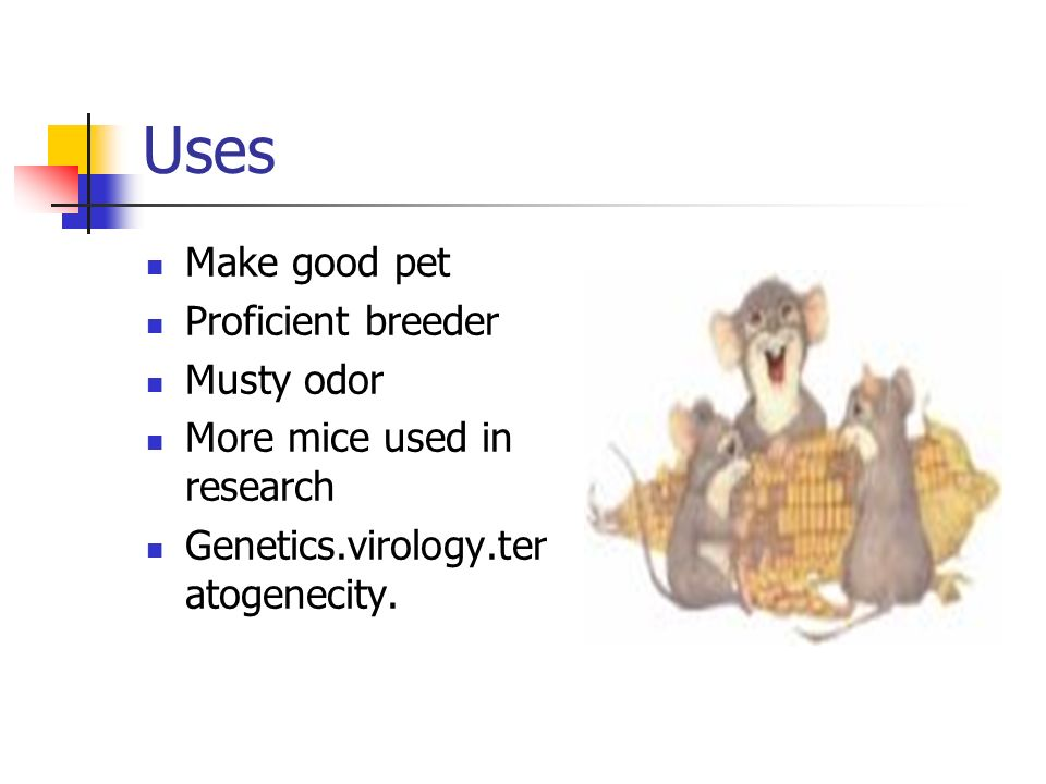 Uses Make good pet Proficient breeder Musty odor