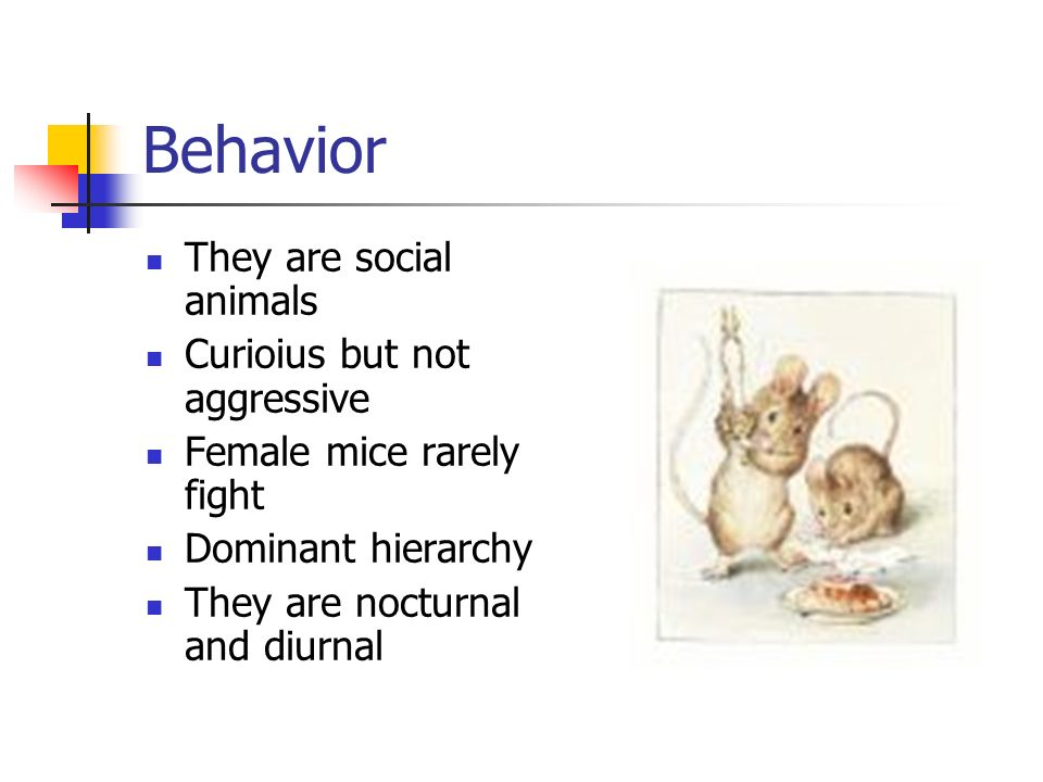 Behavior They are social animals Curioius but not aggressive