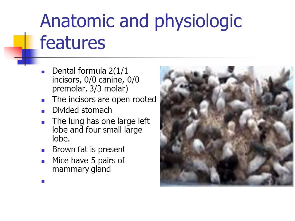 Anatomic and physiologic features