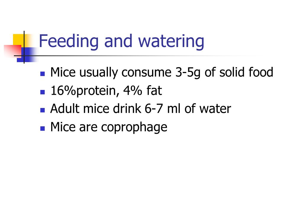 Feeding and watering Mice usually consume 3-5g of solid food