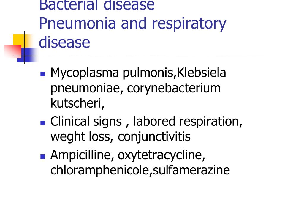 Bacterial disease Pneumonia and respiratory disease