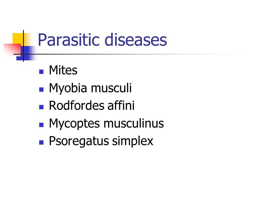 Parasitic diseases Mites Myobia musculi Rodfordes affini
