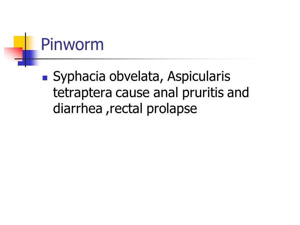 Pinworm Syphacia obvelata, Aspicularis tetraptera cause anal pruritis and diarrhea ,rectal prolapse