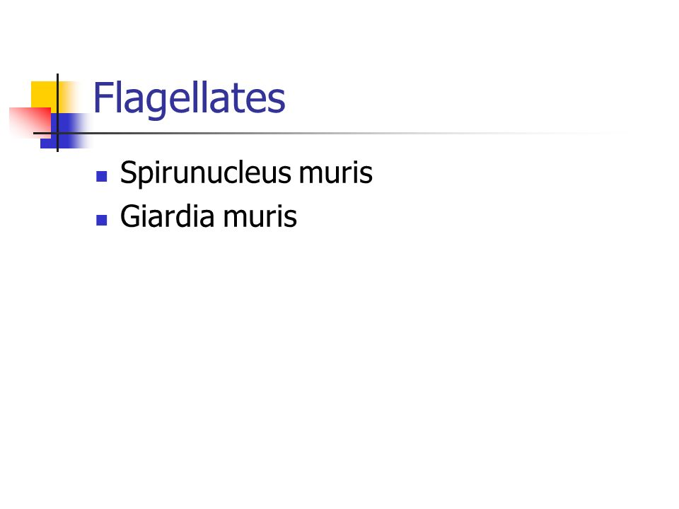Flagellates Spirunucleus muris Giardia muris